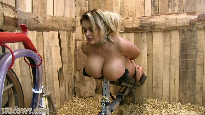 Hucows - Katie � Milking bench HD (544 MB)
